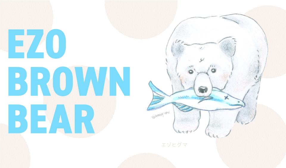 Ezo-Brown-Bear