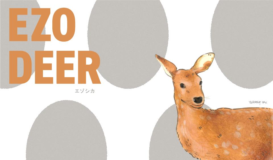 Ezo-Deer